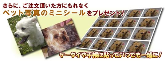 さらに、ご注文頂いた方にもれなくペット写真のミニシールをプレゼント!